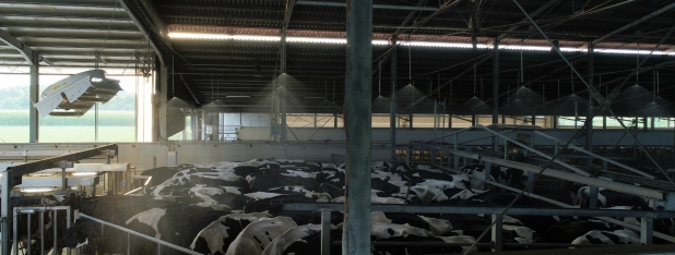 Bagnatura salaattesa mungitura bovine Rotaguido