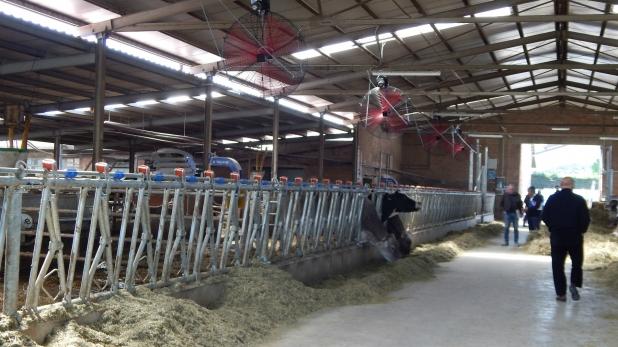 Nuovi ventilatori stalla bovine