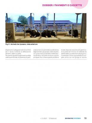 IZ   Articolo Cerzoo Pagina 4