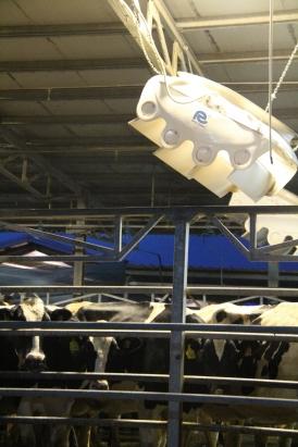 ventilatore stalla bovine