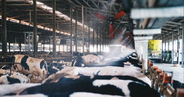 Ventilatori barriera zonaalimentazione bovini rotaguido